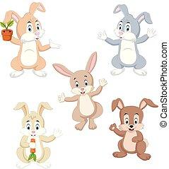 kleur, possing, anders, konijnen, verzameling