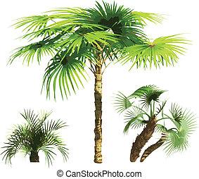 kleur, vector, -, palmen