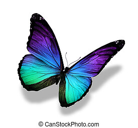 kleur, vlinder, morpho