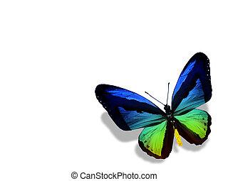kleur, vlinder