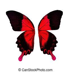 kleur, vlinder, vleugels