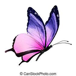 kleur, vlinder, vliegen, vrijstaand, op wit