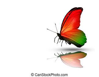 kleur, witte , vrijstaand, achtergrond, vlinder