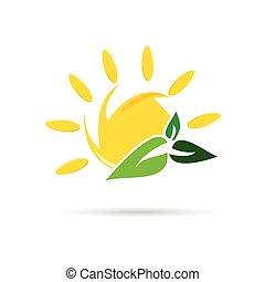 kleur, zon, vector, blad, pictogram