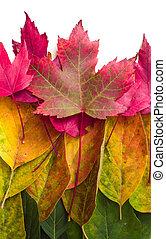 kleuren, blad, herfst