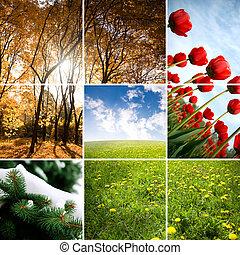 kleuren, van, seizoen