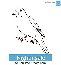 kleurend boek, vector, leren, nachtegaal, vogels