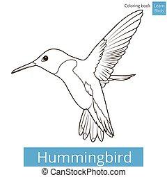 kleurend boek, vector, leren, vogels, kolibrie