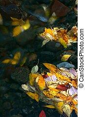 kleurrijke, bladeren