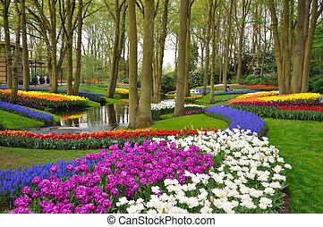 kleurrijke, bloeien, tulpen, in, keukenhof, park, in,...