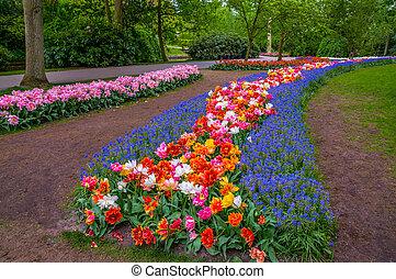 kleurrijke bloemen, wegen, keukenhof, park, lisse, in, holland