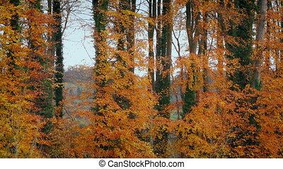 kleurrijke, bomen, in, de, herfst