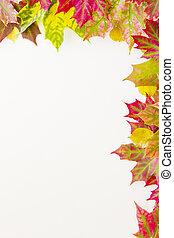 kleurrijke, dalingsbladeren, grens, op wit, achtergrond.