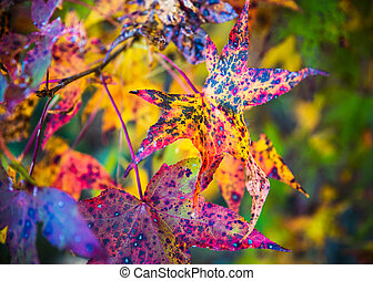 kleurrijke, dalingsgebladerte