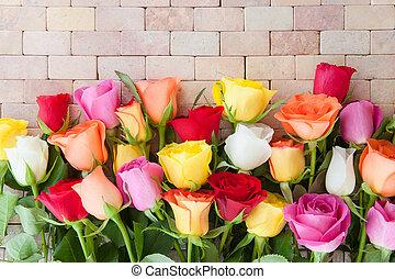 kleurrijke, fris, rozen