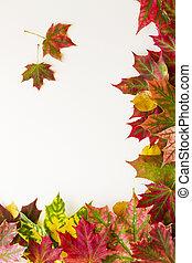 kleurrijke, herfst, dalingsbladeren, grens, op wit, achtergrond.