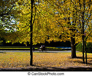 kleurrijke, herfst, herfst, park