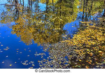 kleurrijke, herfst landschap, op, de, meer, -, beauty, van, herfstachtig, natuur
