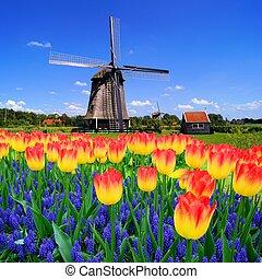 kleurrijke, hollandse, bloemen, lente, classieke, nederland, windmolen