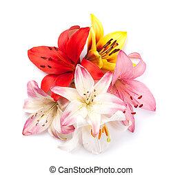 kleurrijke, lelie, bloemen