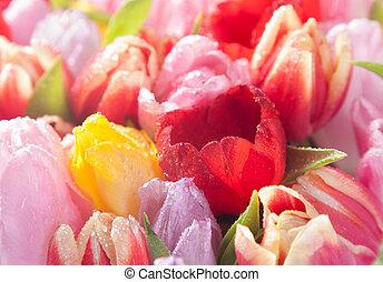kleurrijke, lente, tulpen