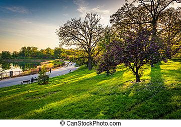 kleurrijke, meer, bomen, druid, park, heuvel, baltim,...