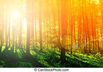 kleurrijke, mystiek, bos, met, zon ray, op, morgen