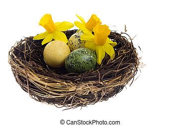 kleurrijke, nest, vervend, vogels, bloemen, eitjes