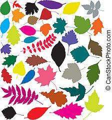 kleurrijke, silhouettes, van, bladeren