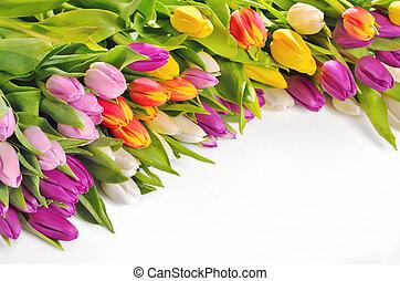 kleurrijke, tulpen, bloemen