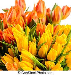 kleurrijke, tulpen, bos van, lentebloemen