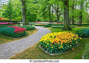 kleurrijke, tulpen, keukenhof, park, lisse, in, holland