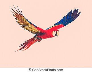 kleurrijke, vliegen, papegaai, toned