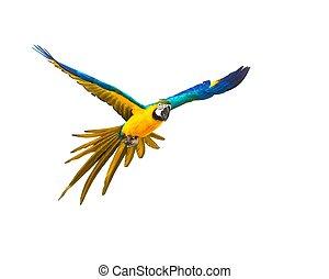 kleurrijke, vliegen, papegaai, vrijstaand, op wit
