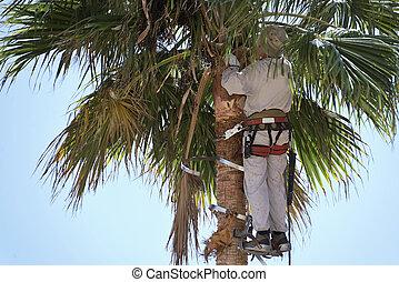 klippande, palm trä, ormbunksblad, uppe