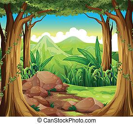 klipper, hos, den, skov