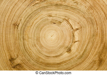 kloc, cięty, struktura, woodgrain