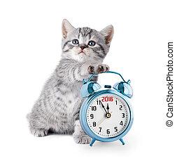 klocka, alarm, kattunge, år, 2016, visa