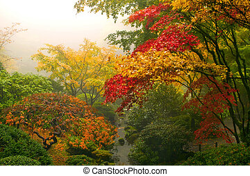 klon, japończyk, drzewa, upadek