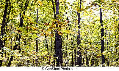 klon, prospekt, gałąź, drzewo, park, panoramiczny