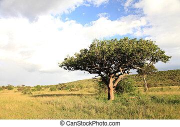 kloof, groot, mara, -, maasai, kenia, vallei