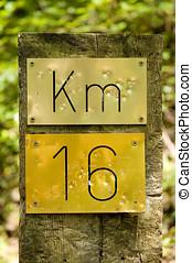 km, 16, zingt, in, een, bos