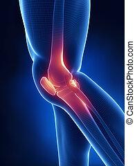 knä röntga, blå, anatomi