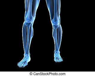 knee illustration - 3d rendered illustration of human legs...