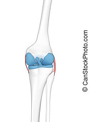 Knee posterior view anatomy cartoon view