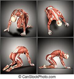 knieling, posities, render, medisch, 3d, figuur, mannelijke