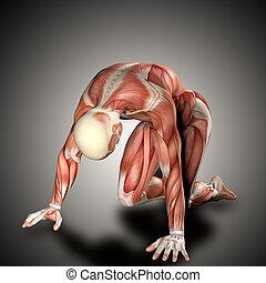 knieling, render, medisch, 3d, figuur, positie, mannelijke