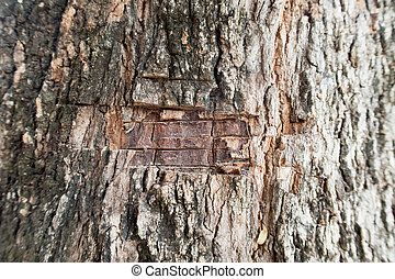 Knife marks on the bark