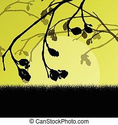 knoppar, fjäder, vektor, träd filial