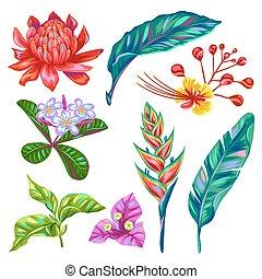 knoppar, sätta, bladen, flerfärgad, tropisk, flowers., ...
